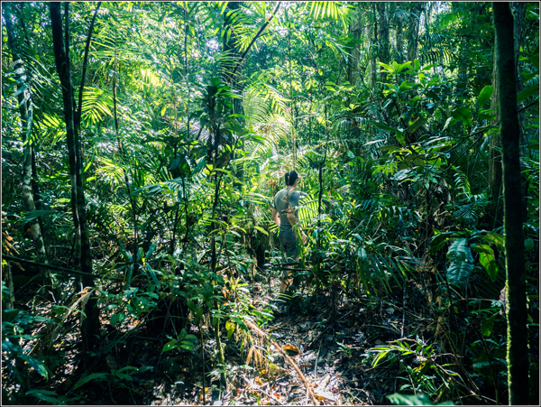 Daintree Rainforest Vincent