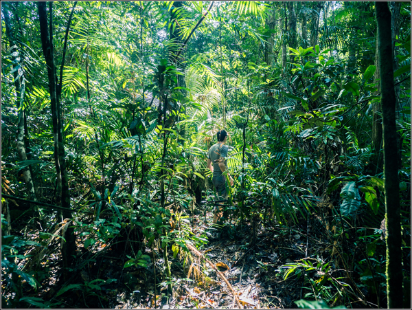 Daintree Forest Vincent jungle