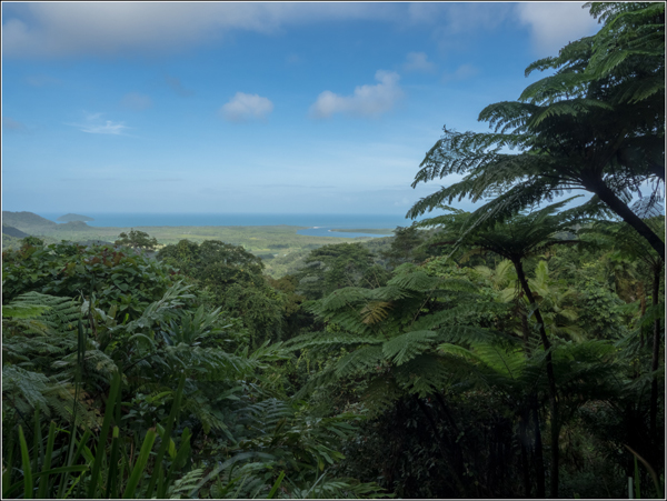 Daintree Forest Paysage